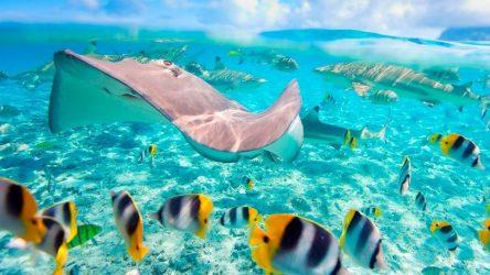 corales y playas